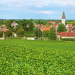 The Best of Burgandy